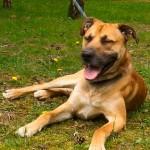 SPA chien à adopter Evan