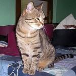 SPA chat à adopter Sencha