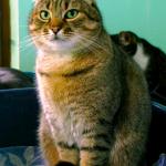 SPA chat à adopter Bouba