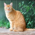 SPA chat à adopter Karamel