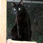 SPA chat à adopter Michika