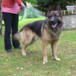 SPA chien à adopter Edgar