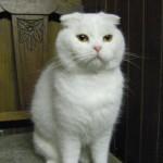 SPA chat à adopter Fleur de sel