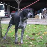 SPA chien à adopter Golan