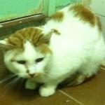 SPA chat à adopter Benji