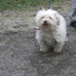SPA chien à adopter Nanou