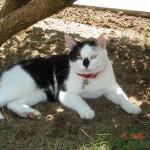 SPA chat à adopter Néné