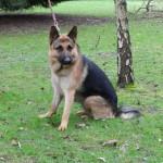 SPA chien à adopter Felko