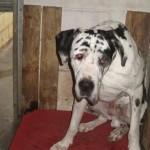 SPA chien à adopter Djengo