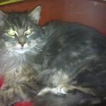 SPA chat à adopter Emeraude
