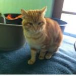 SPA chat à adopter Trésor