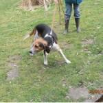SPA chien à adopter Aramis