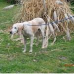 SPA chien à adopter Vautrait