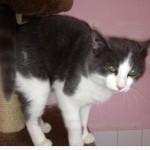 SPA chat à adopter Titi