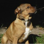 SPA chien à adopter Bouboule