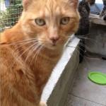 SPA chat à adopter Ralph
