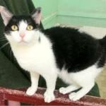 SPA chat à adopter Zorro