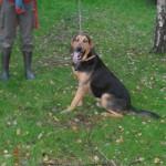 SPA chien à adopter Bob