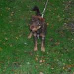 SPA chien à adopter Halko