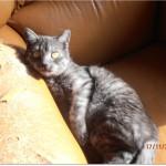 SPA chat à adopter Edgar