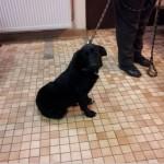 SPA chien à adopter Gabin