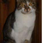 SPA chat à adopter Louna