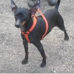 SPA chien à adopter Tito