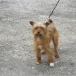 SPA chien à adopter Doudou