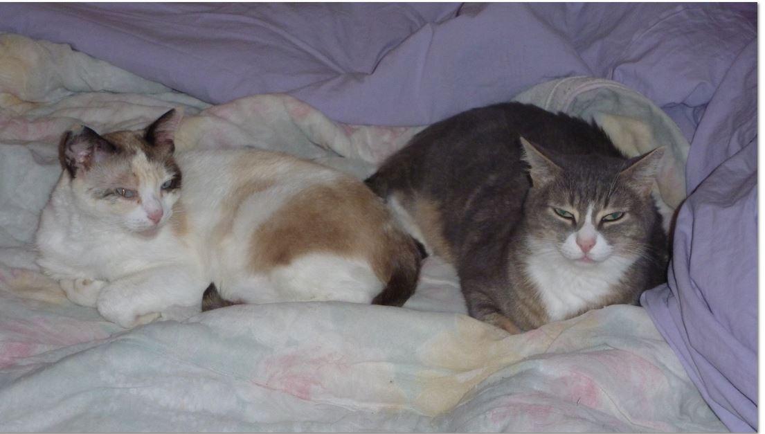 lune et malou 1 adoption chien chat spa du centre loiret orl ans fert st aubin chilleurs. Black Bedroom Furniture Sets. Home Design Ideas