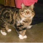 SPA chat à adopter Pépère