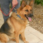 SPA chien à adopter Fibie