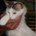 SPA chat à adopter Princesse