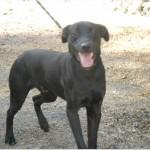 SPA chien à adopter Tango
