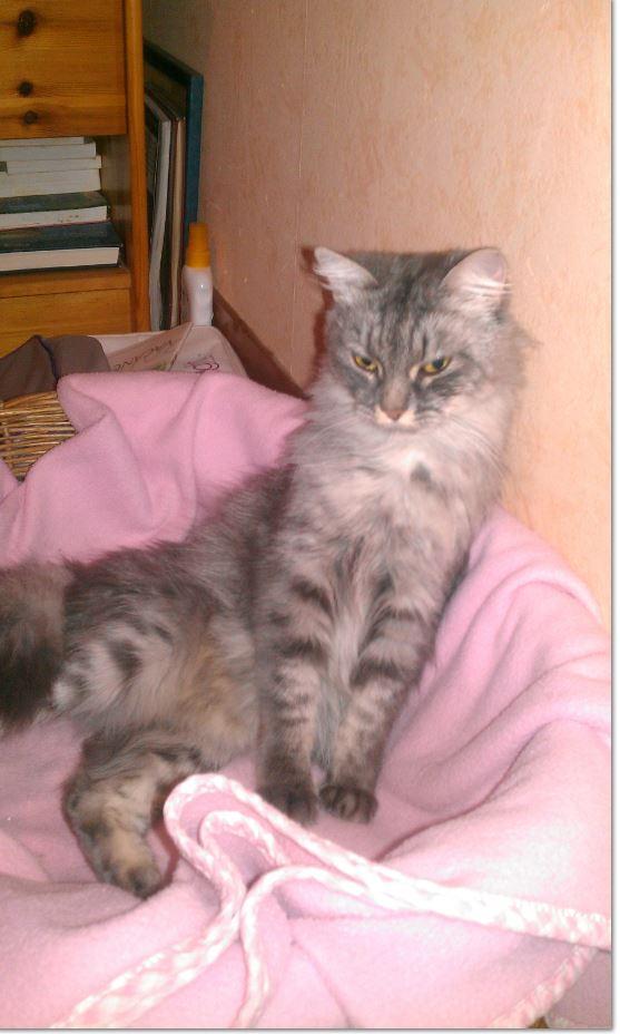 photos de callie adoption chien chat spa du centre loiret orl ans fert st aubin chilleurs. Black Bedroom Furniture Sets. Home Design Ideas