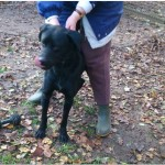 SPA chien à adopter Idéfix