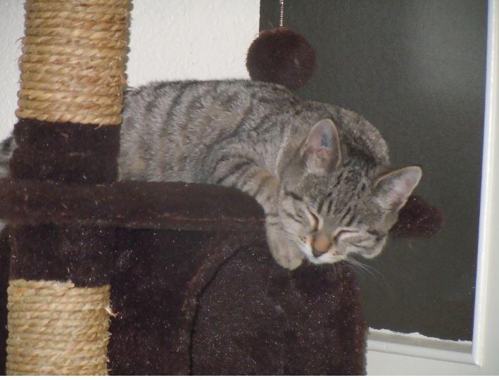 espoir adoption chien chat spa du centre loiret orl ans fert st aubin chilleurs. Black Bedroom Furniture Sets. Home Design Ideas