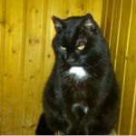 SPA chat à adopter Pacha