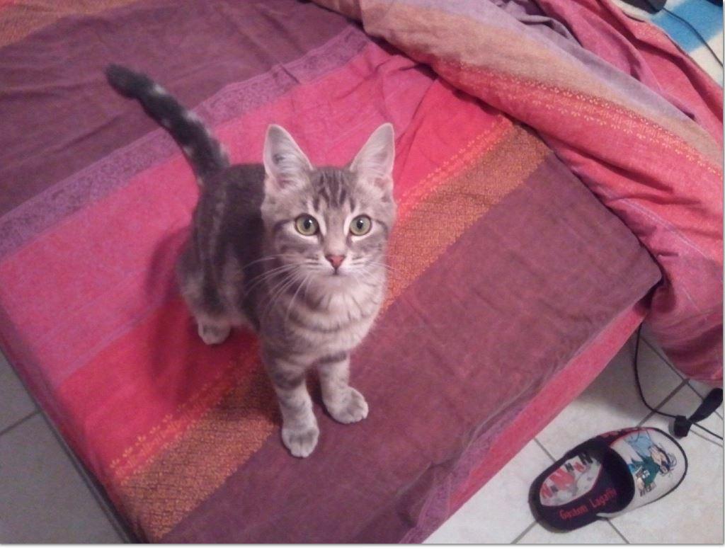 toscane2 adoption chien chat spa du centre loiret orl ans fert st aubin chilleurs. Black Bedroom Furniture Sets. Home Design Ideas