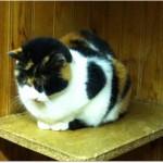 SPA chat à adopter Cara
