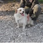 SPA chien à adopter Titchou