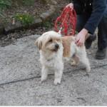 SPA chien à adopter Wetka