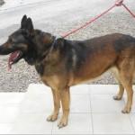 SPA chien à adopter Daiko