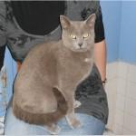 SPA chat à adopter Lulu