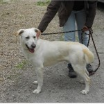 SPA chien à adopter Malo