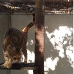 SPA chat à adopter Manatthan