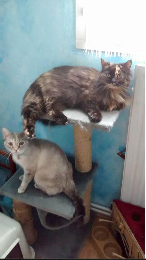malice et molly adoption chien chat spa du centre loiret orl ans fert st aubin chilleurs. Black Bedroom Furniture Sets. Home Design Ideas