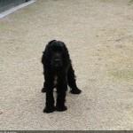 SPA chien à adopter Ioda ADOPTE