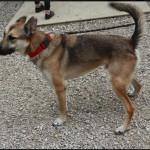 SPA chien à adopter Kangoo ADOPTE