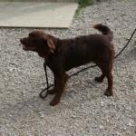 SPA chien à adopter Osiris