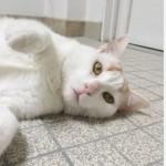 SPA chat à adopter Malcom